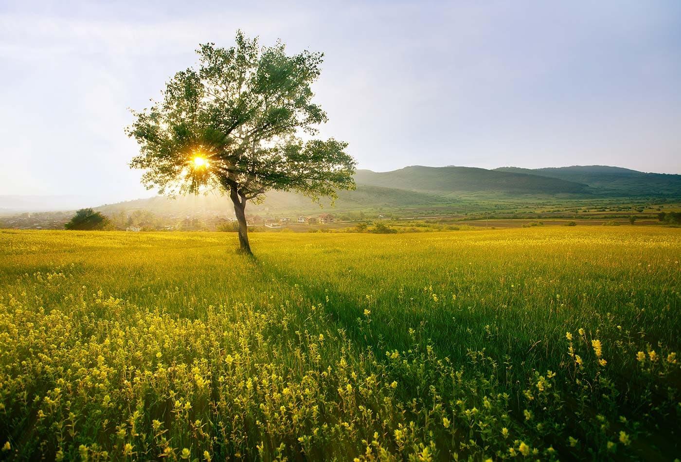 tree field sunlight color